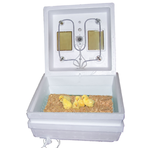 Ясли и брудеры Тип терморегулятора цифровой